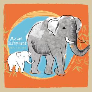 Zee_Elephant2